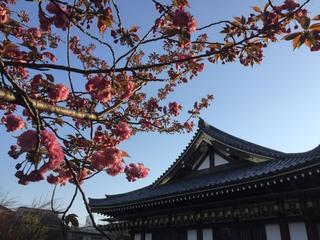 実相院(沼袋)_17.04.16.jpg